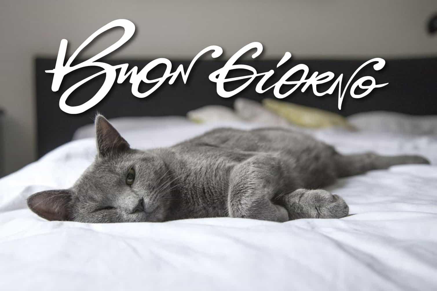 Buon giorno con gatto bianco e nero