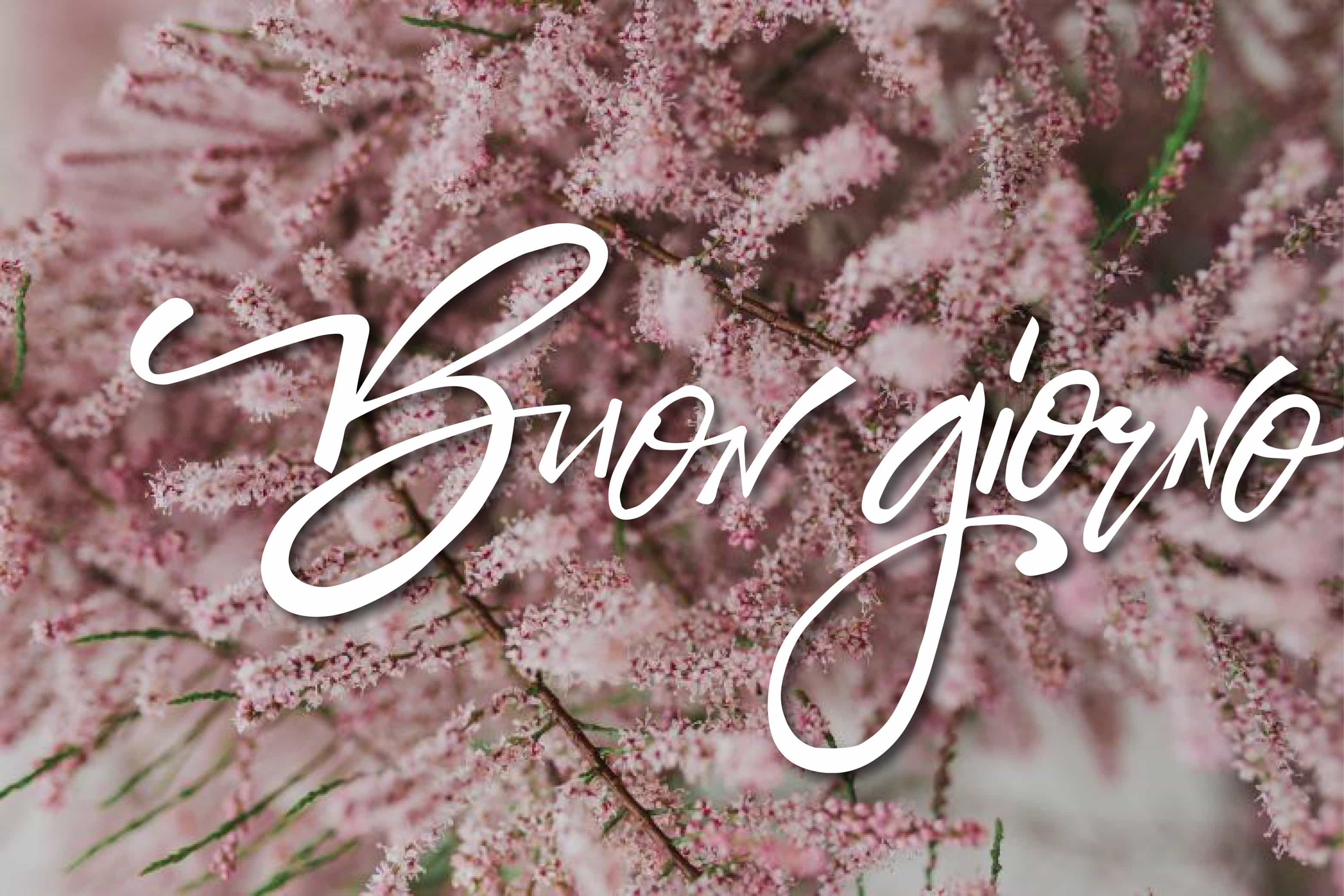 Buongiorno con fiori per Facebook