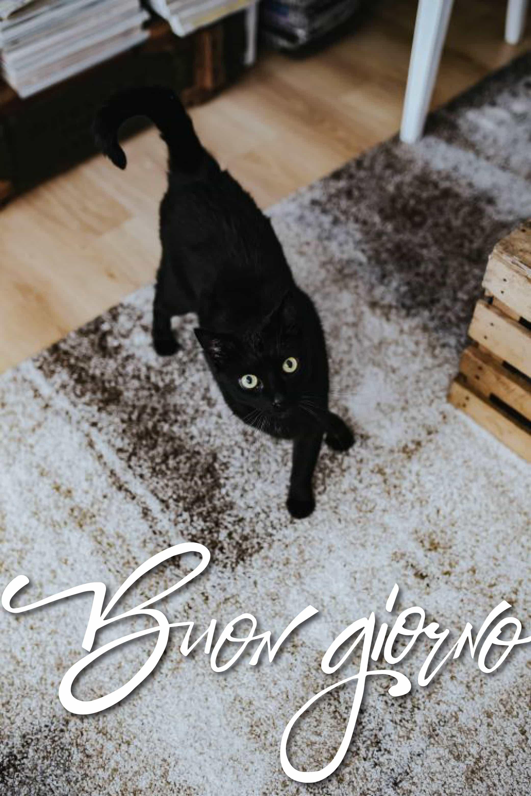 Foto di buon halloween con gatto nero