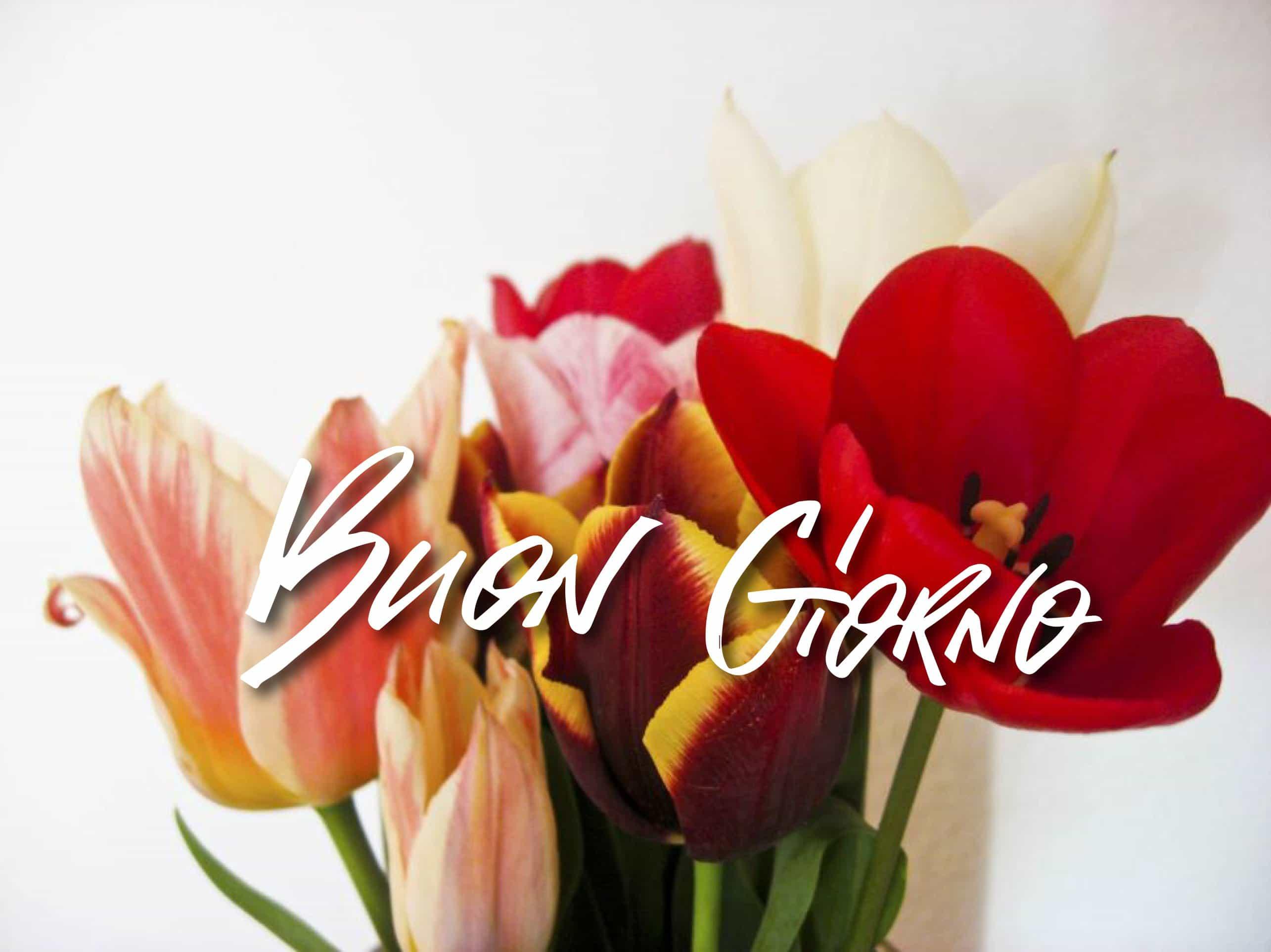 Buona primavera foto con i tulipani