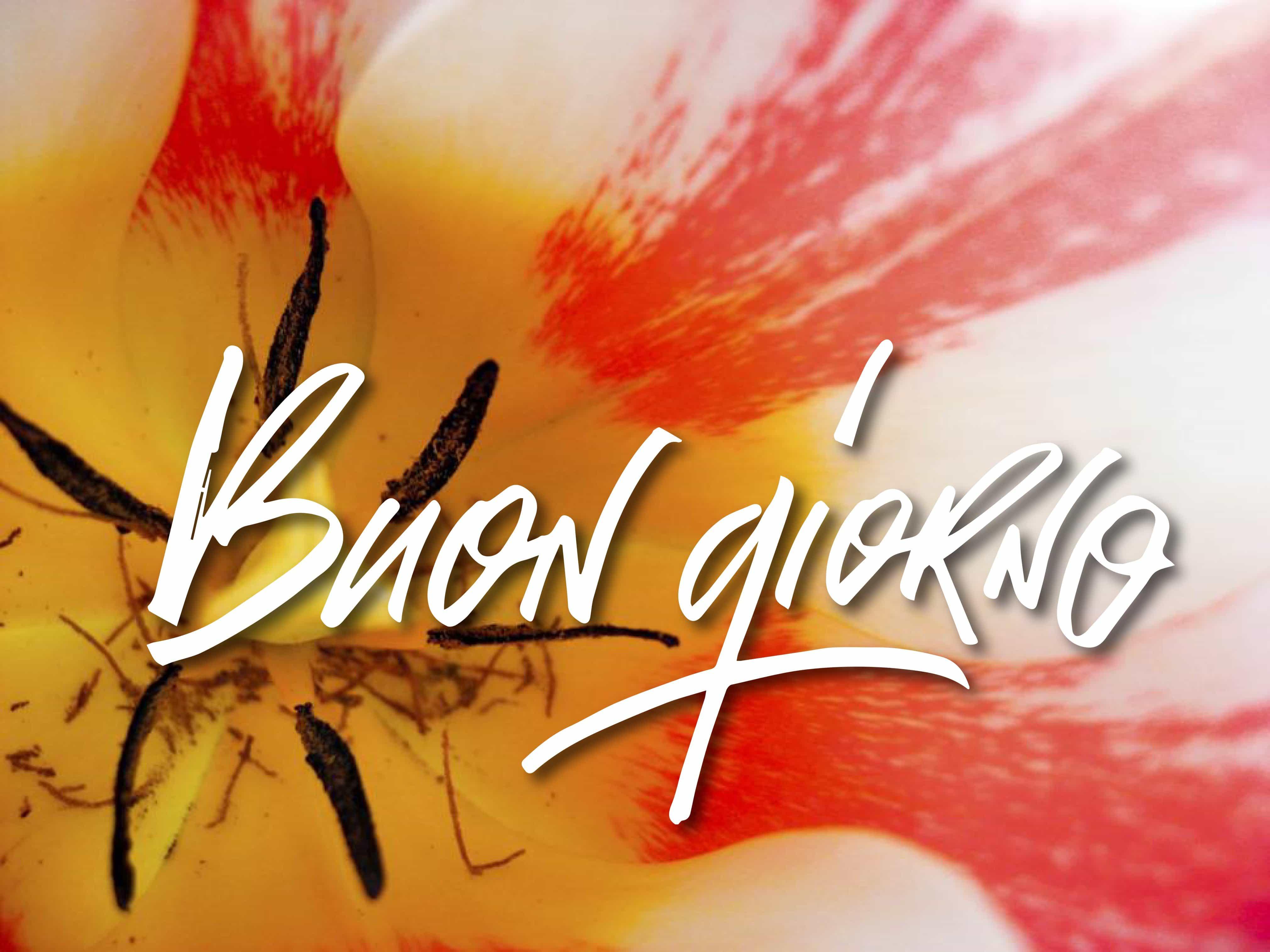 Immagini buongiorno con fiori bellissimi