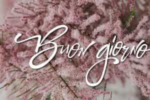 Buona giornata con i fiori bellissimi