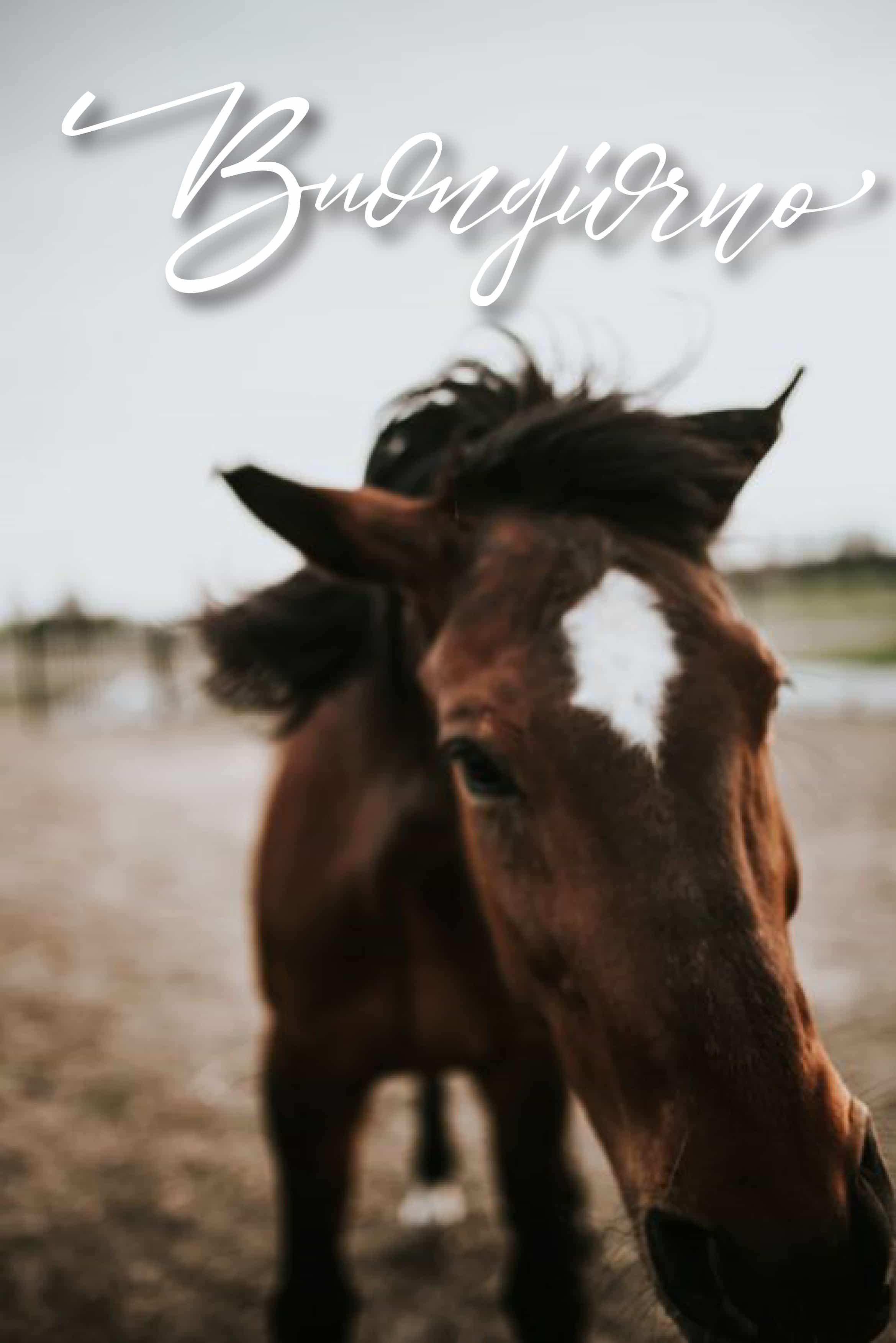 Buongiorno con animali simpatici! Saluti da un cavallo