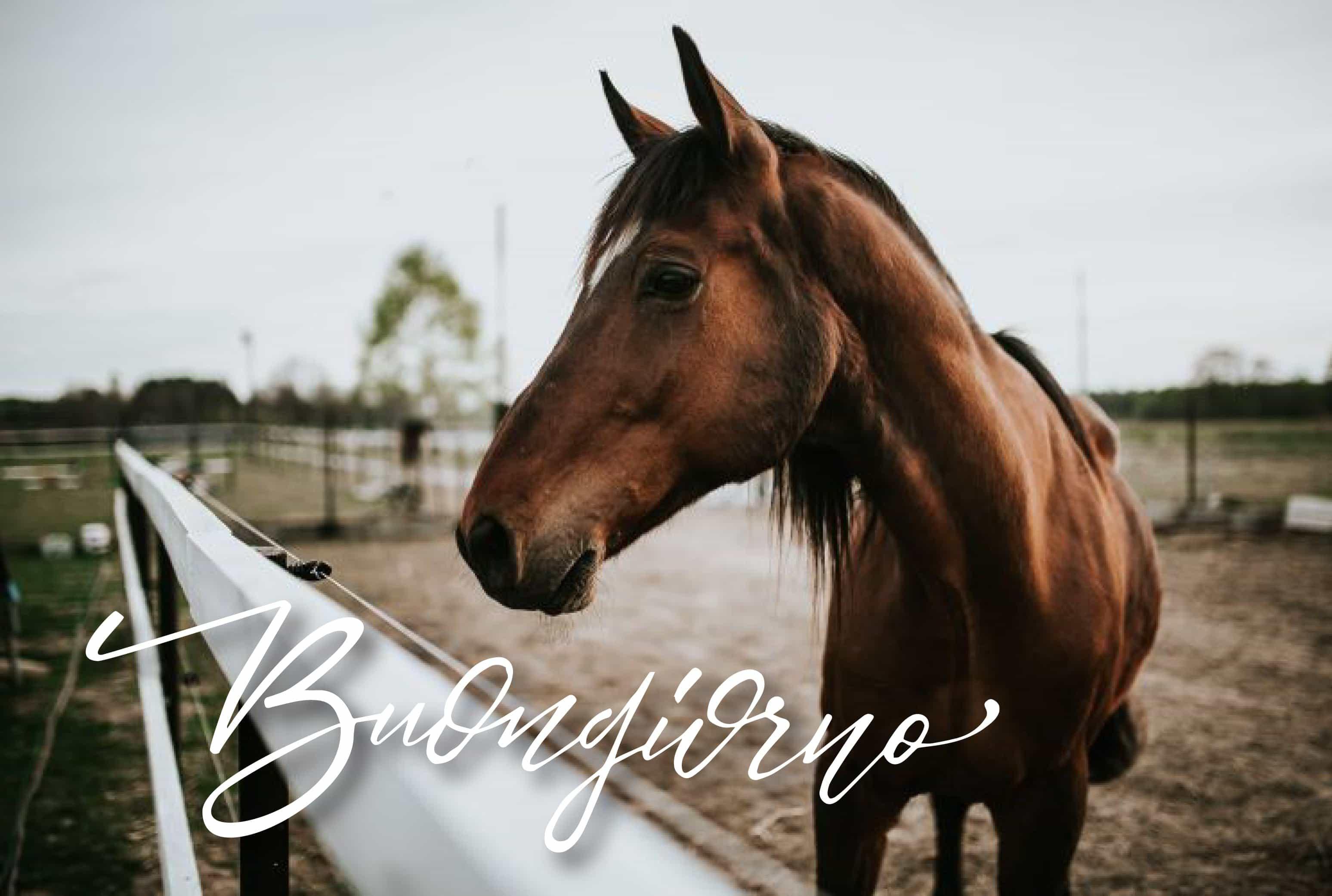 Buona giornata da un cavallo! Foto buon giorno con animali