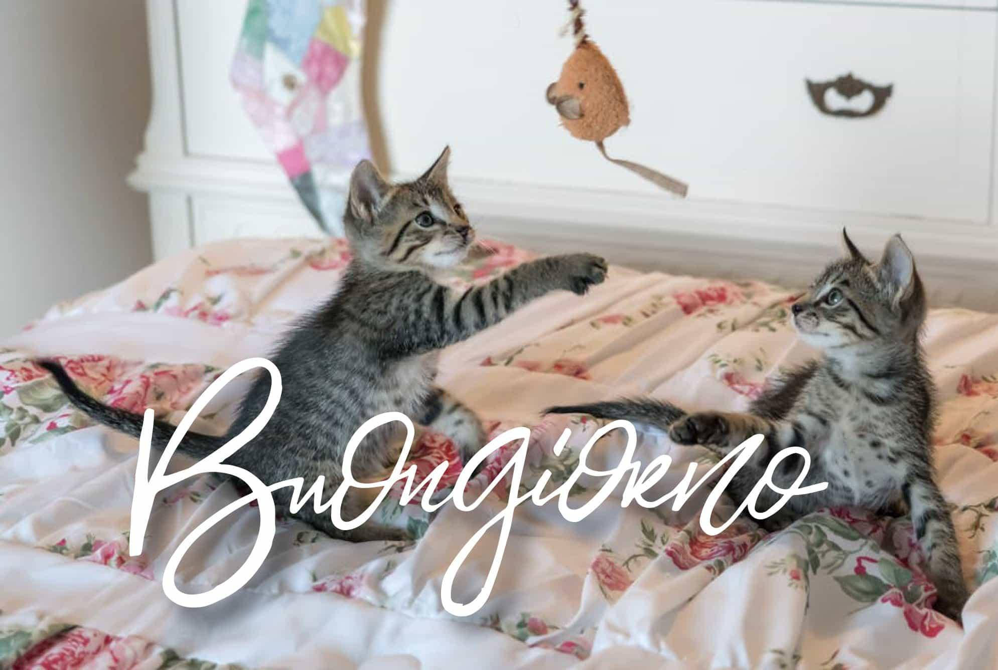 Buongiorno con gatto che sta giocando