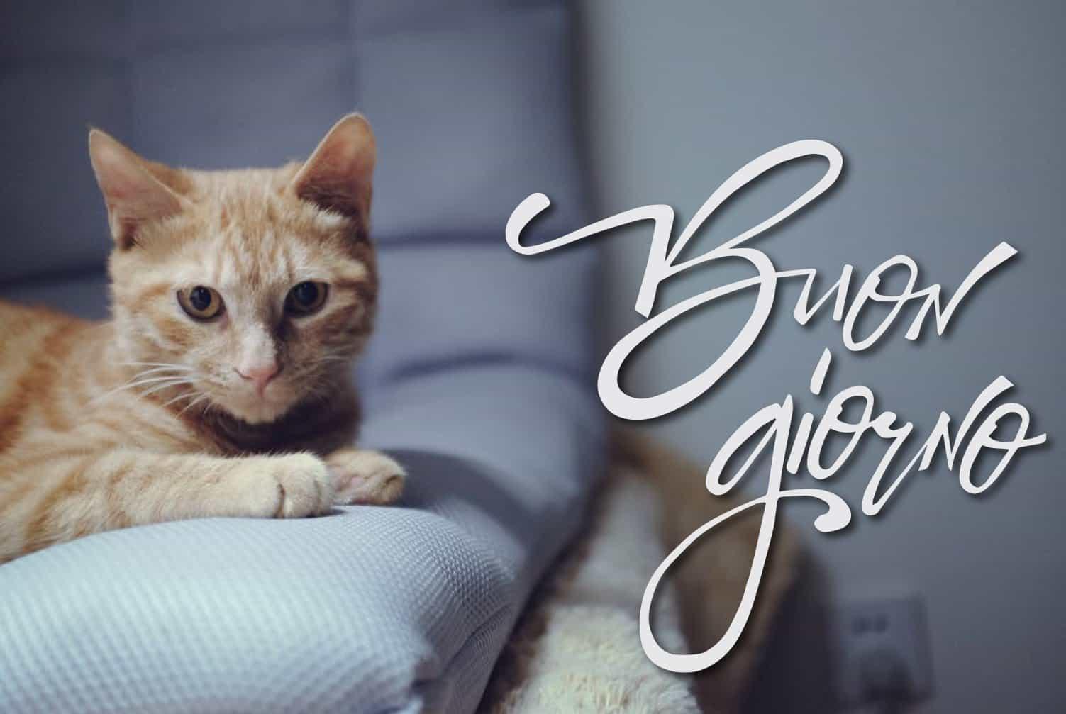 Buona giornata con gatto! Cartoline buongiorno con animali