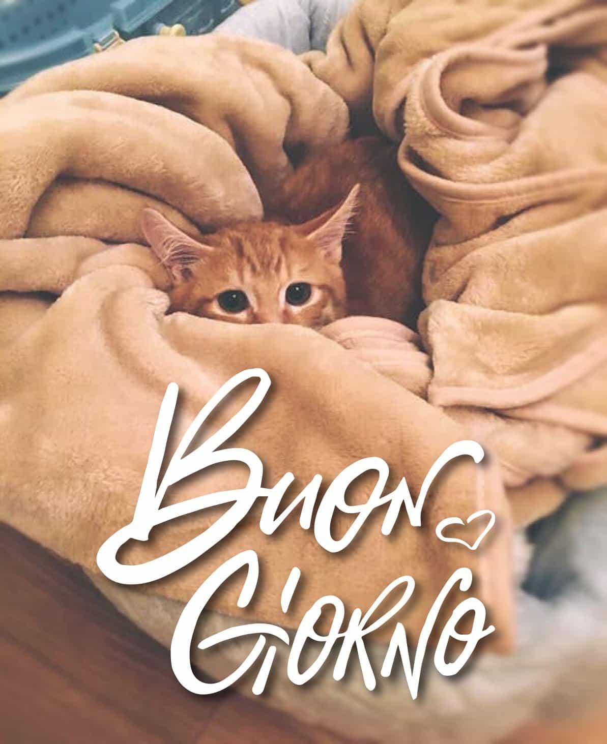 Immagini buongiorno gratis animali gatto