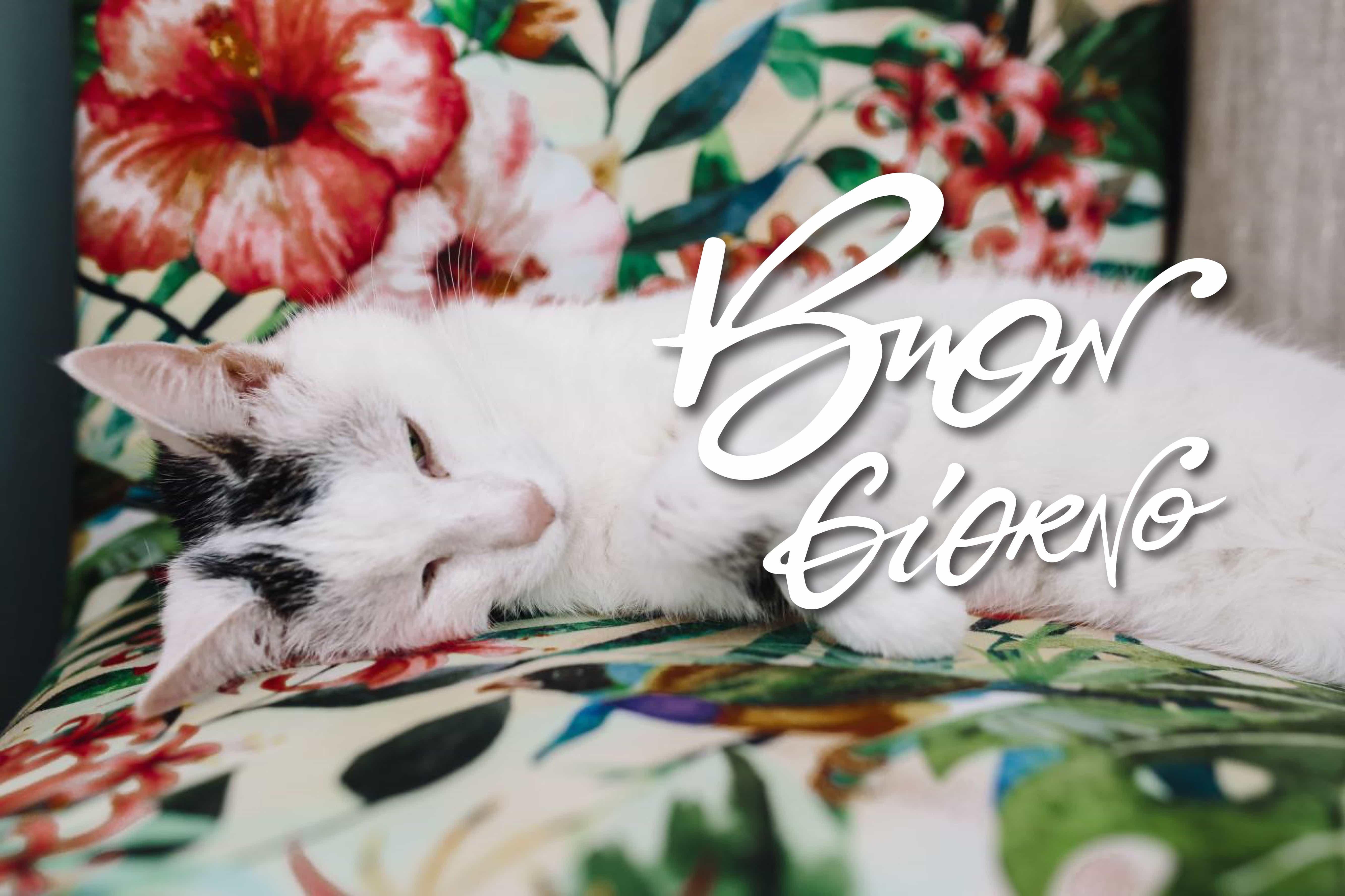 Buongiorno immagine gratis con gatto bello!