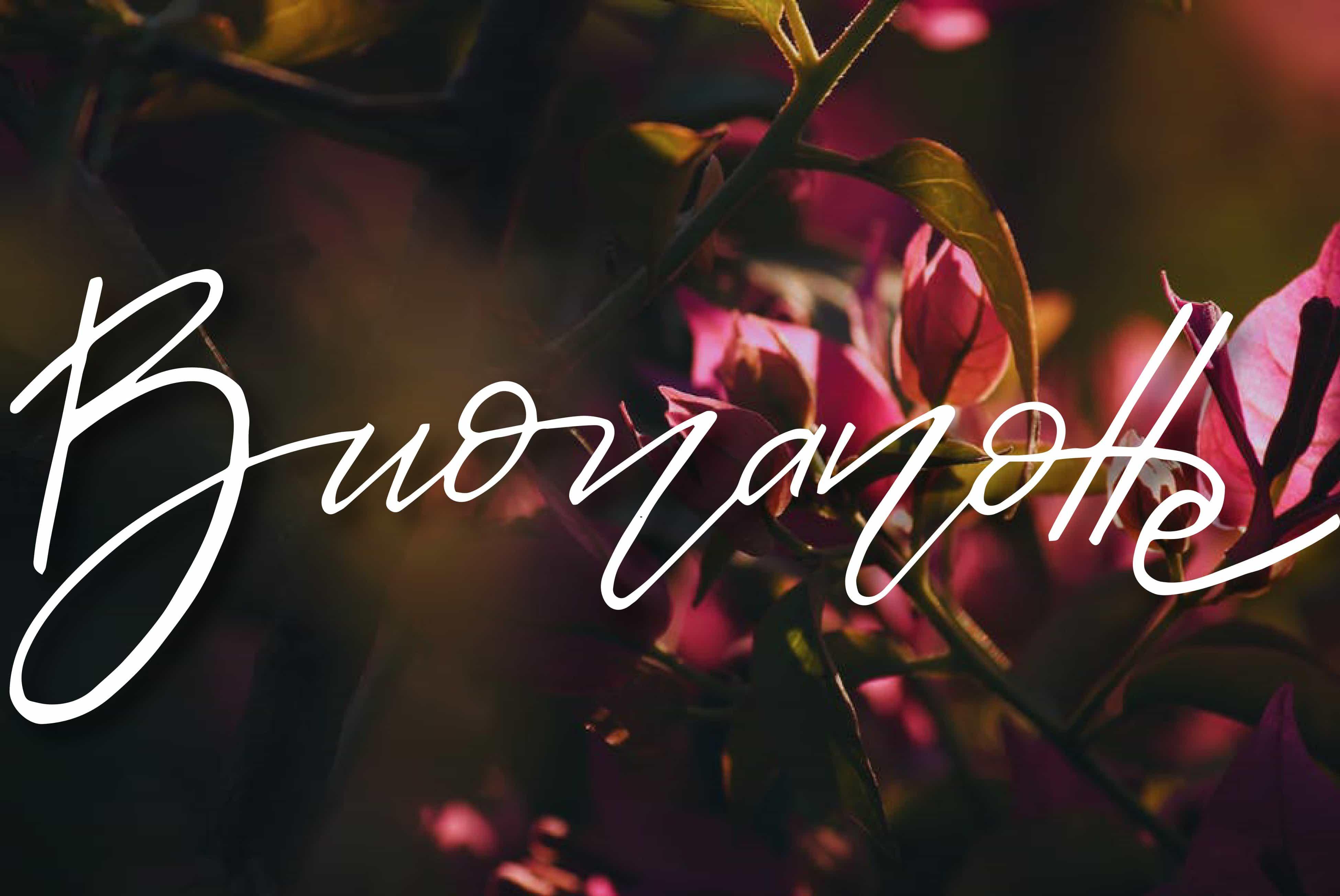 Buonanotte con i fiori foto