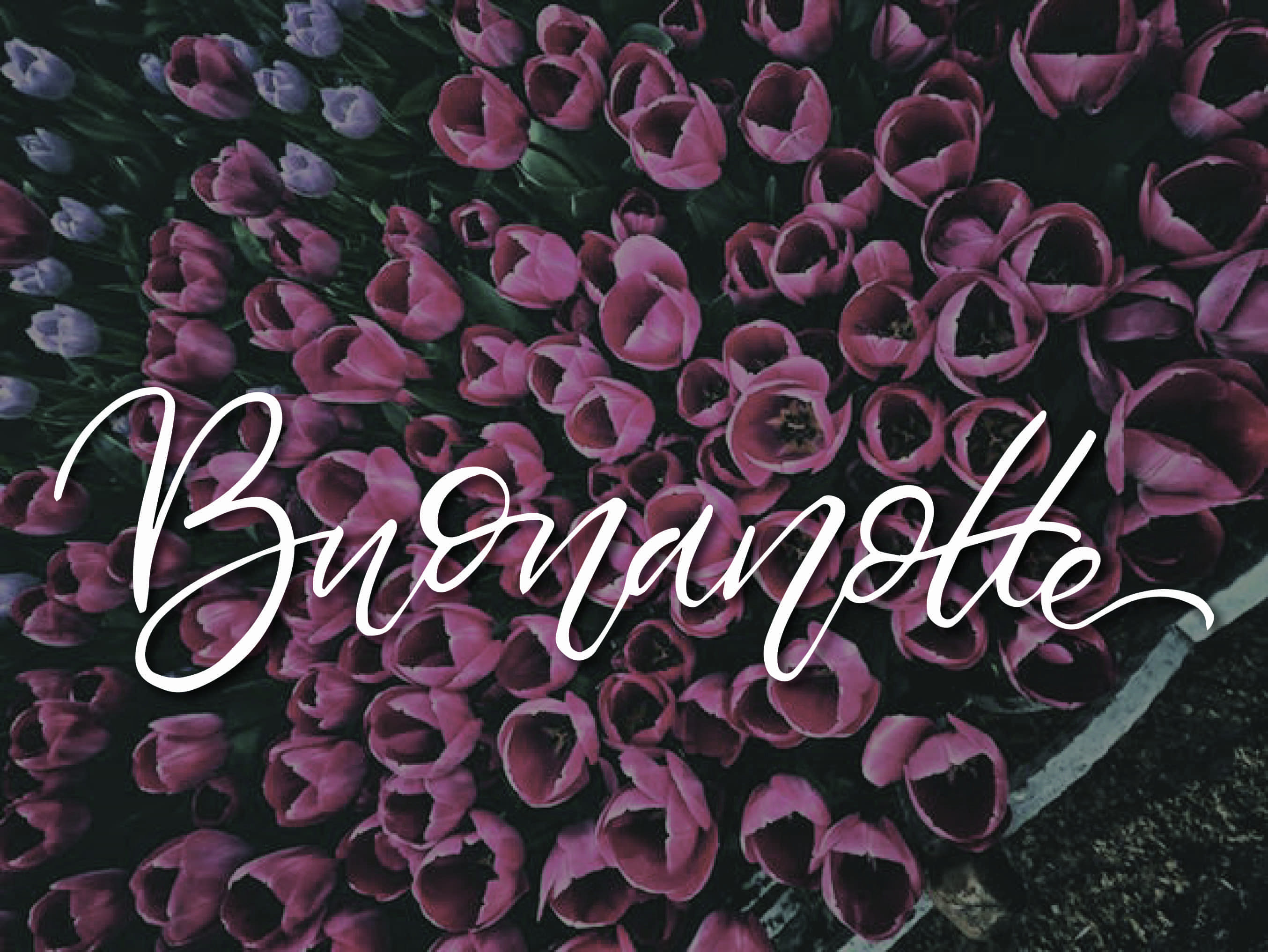 Buonanotte con i tulipani foto per Facebook