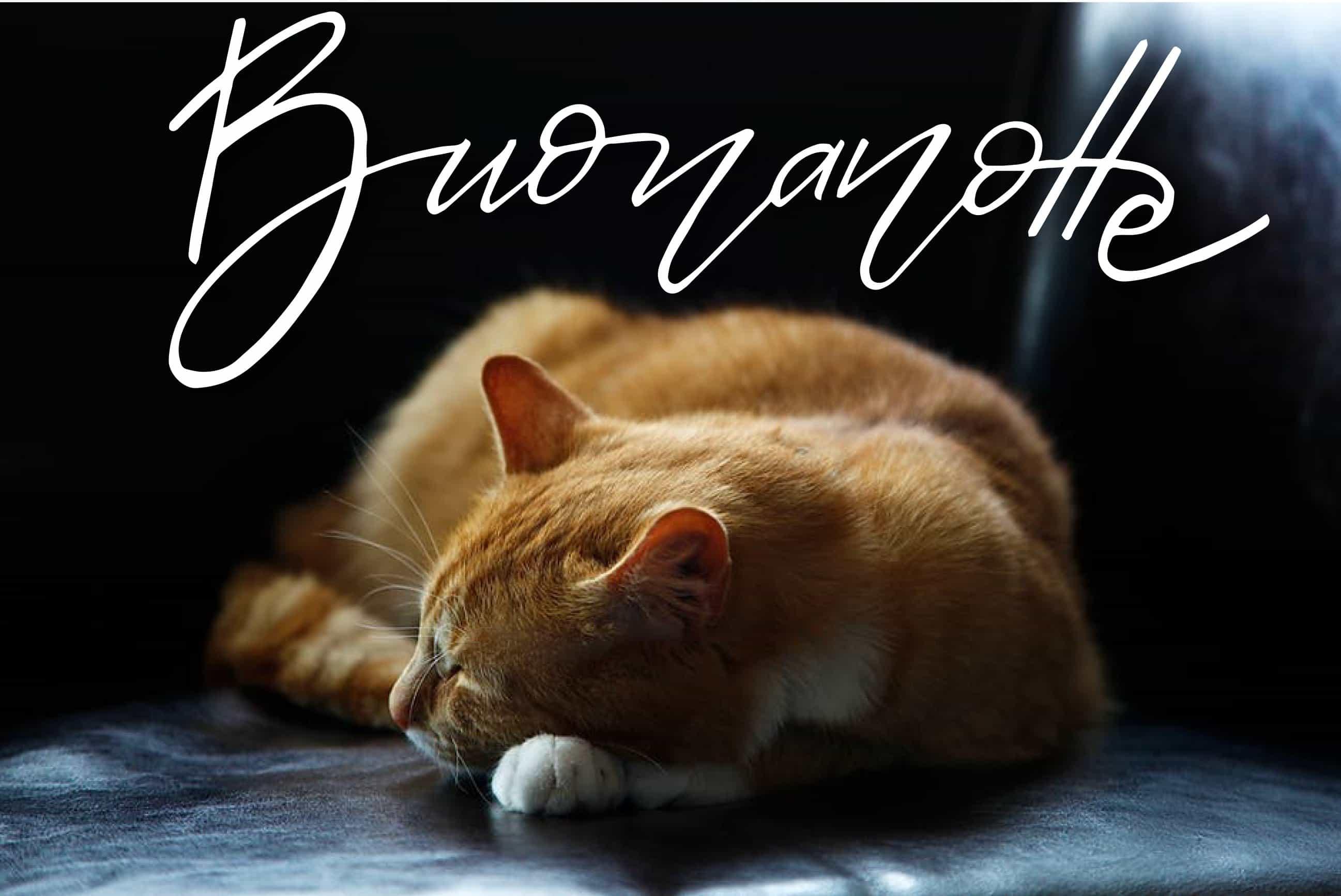 Foto con gatto da augurare buonanotte su Facebook