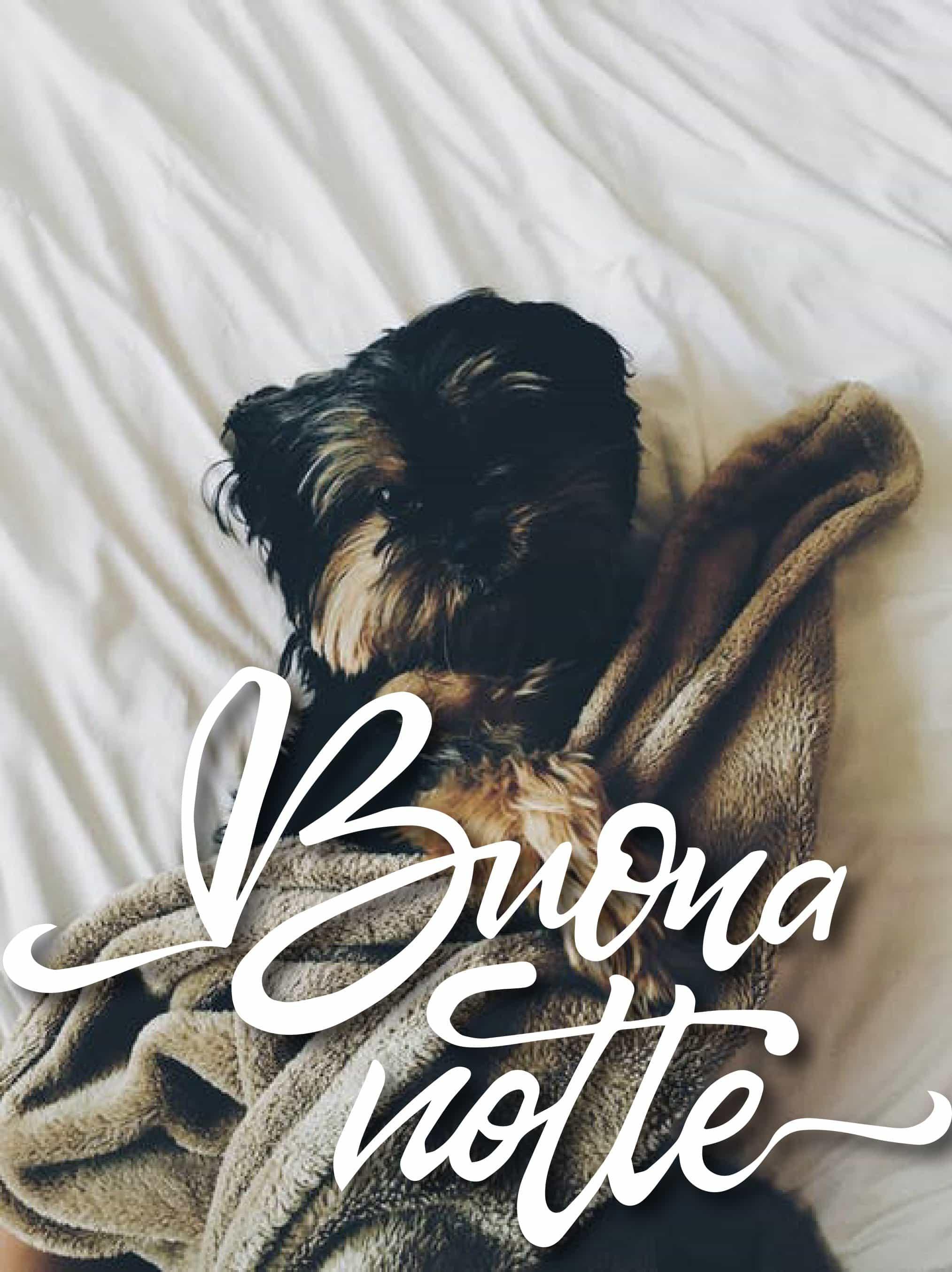 Buonanotte foto con cane da condividere su Facebook