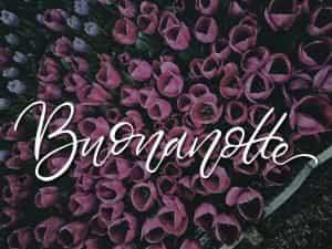 buona notte con i tulipani