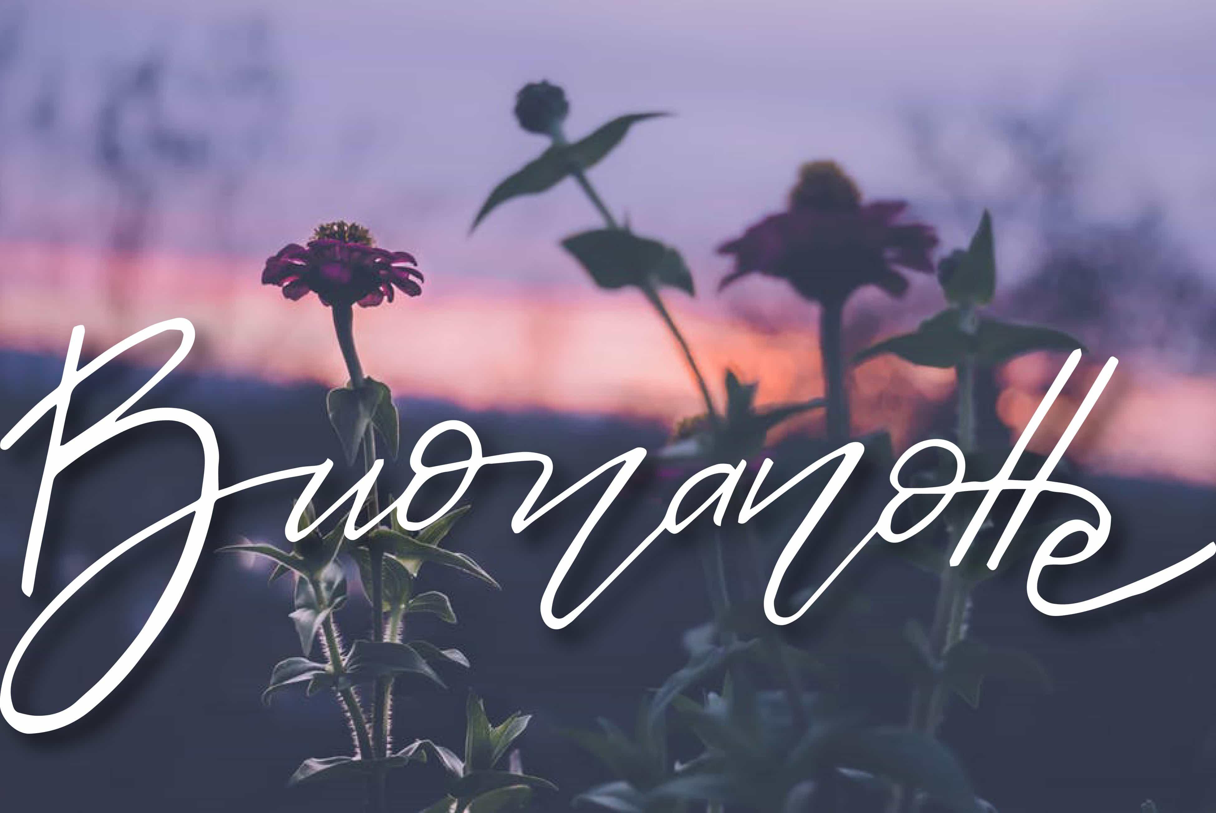 Buonanotte con i fiori e tramonto gratis