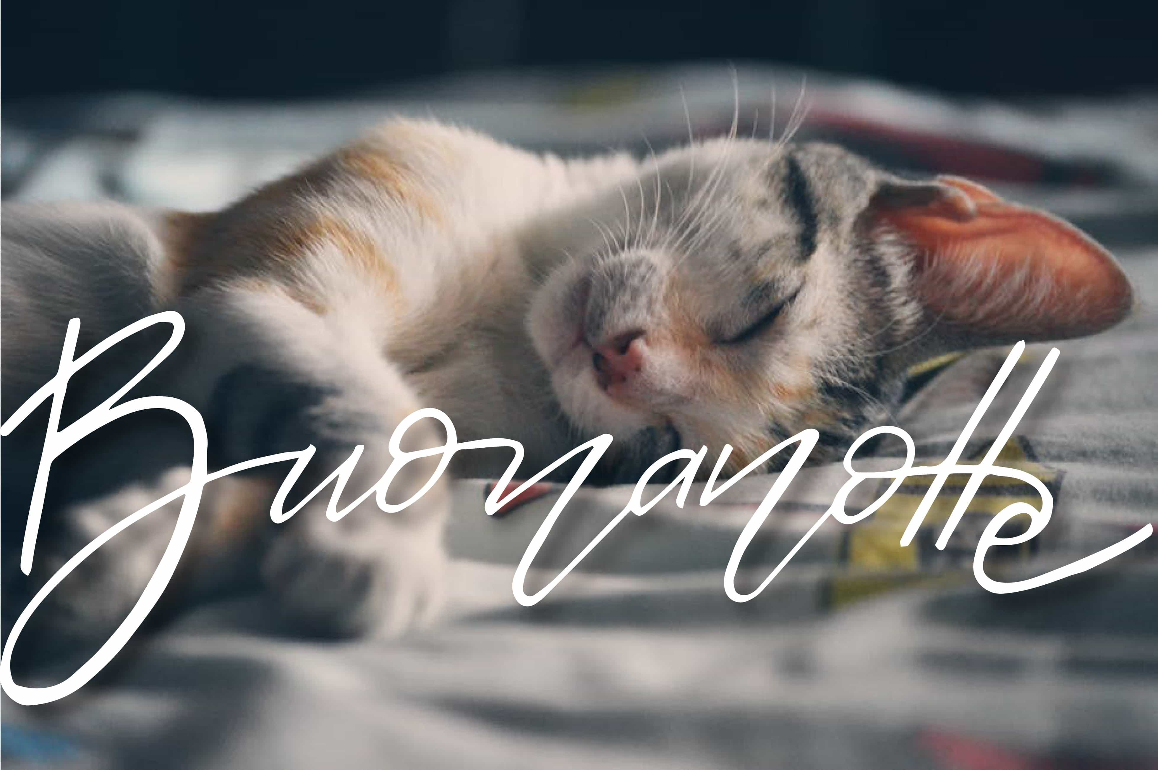 Buonanotte simpatico con gatto