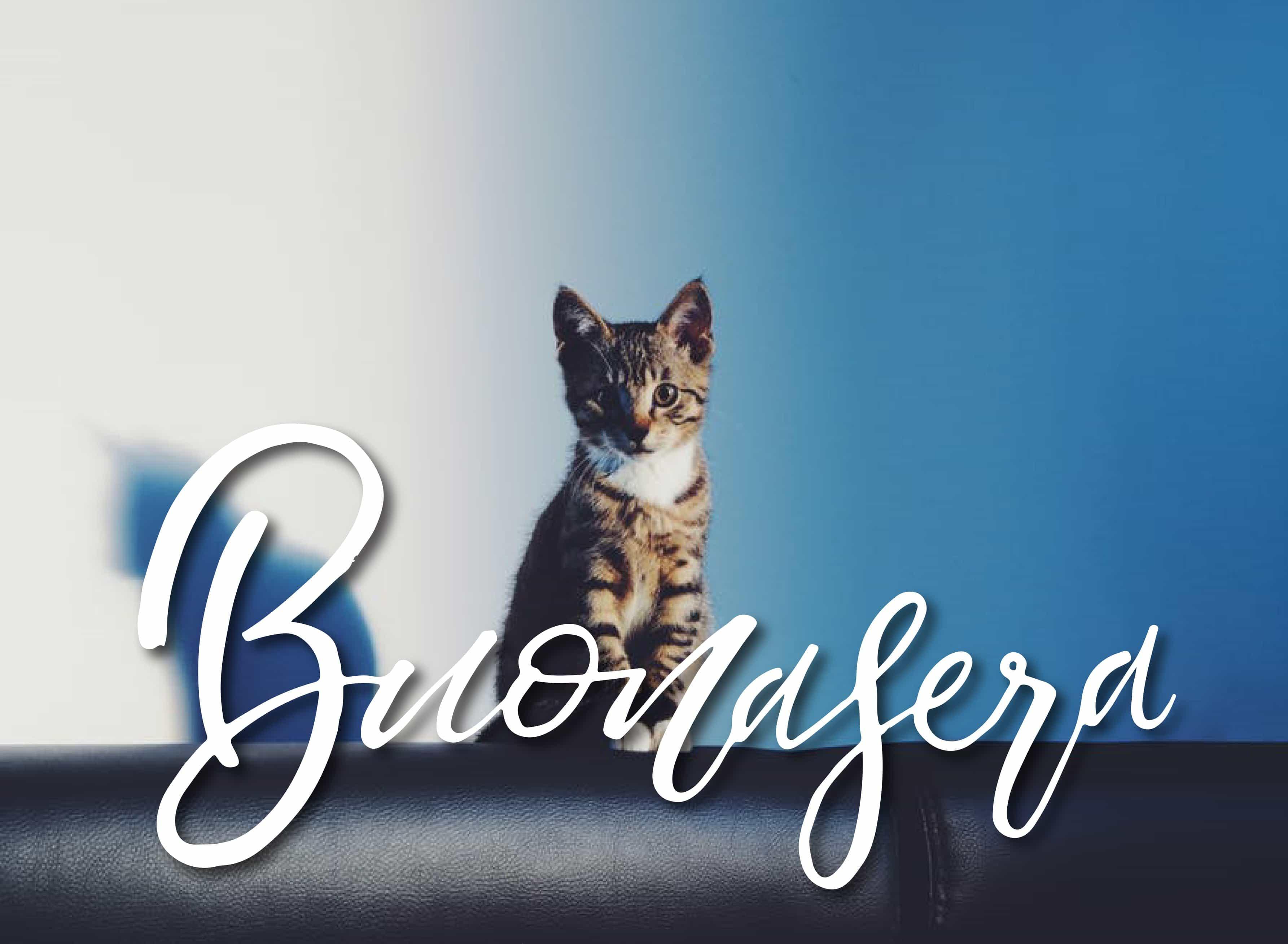 Buona sera con il gatto per Facebook