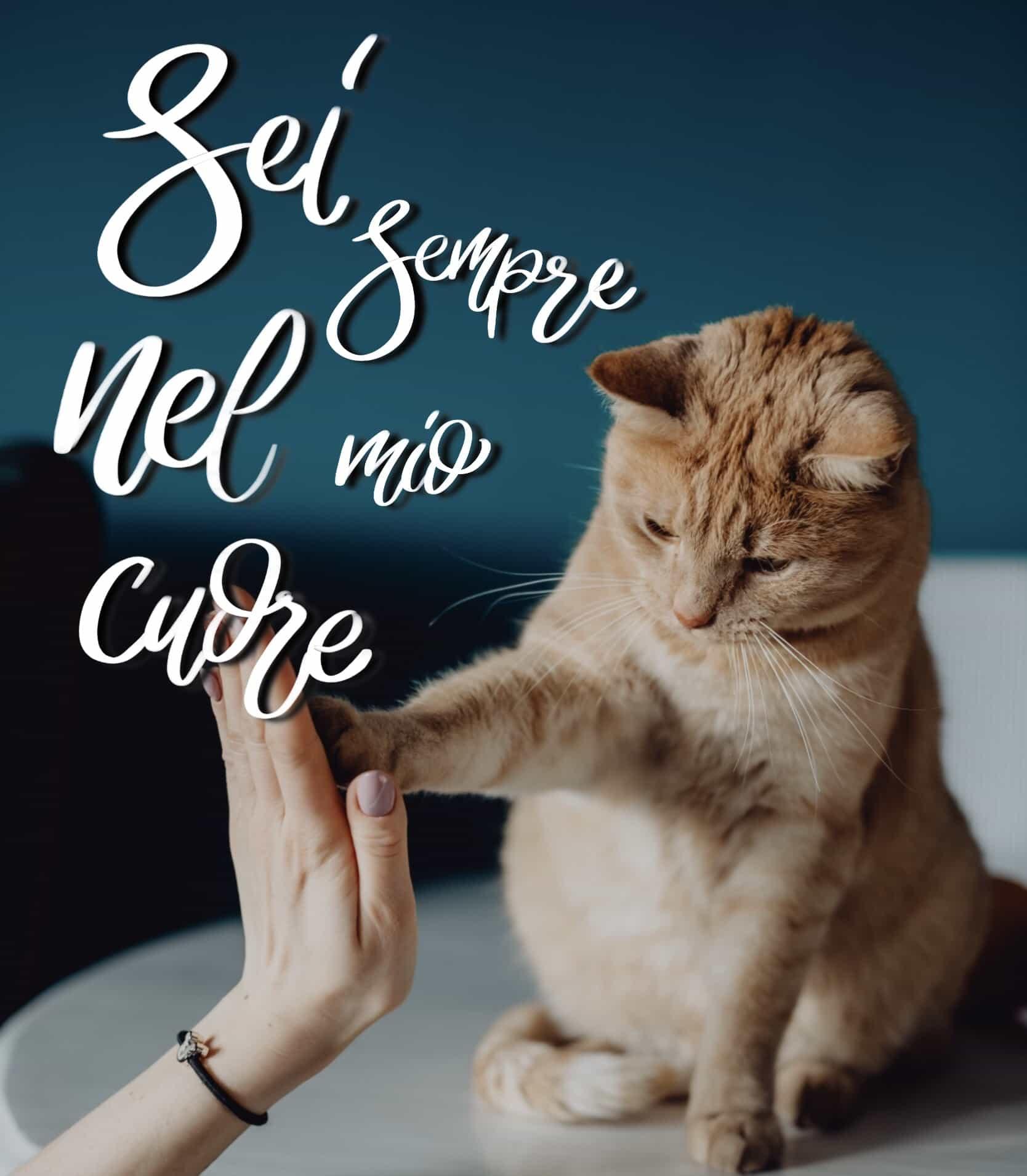 Buona serata dal gatto foto gratis