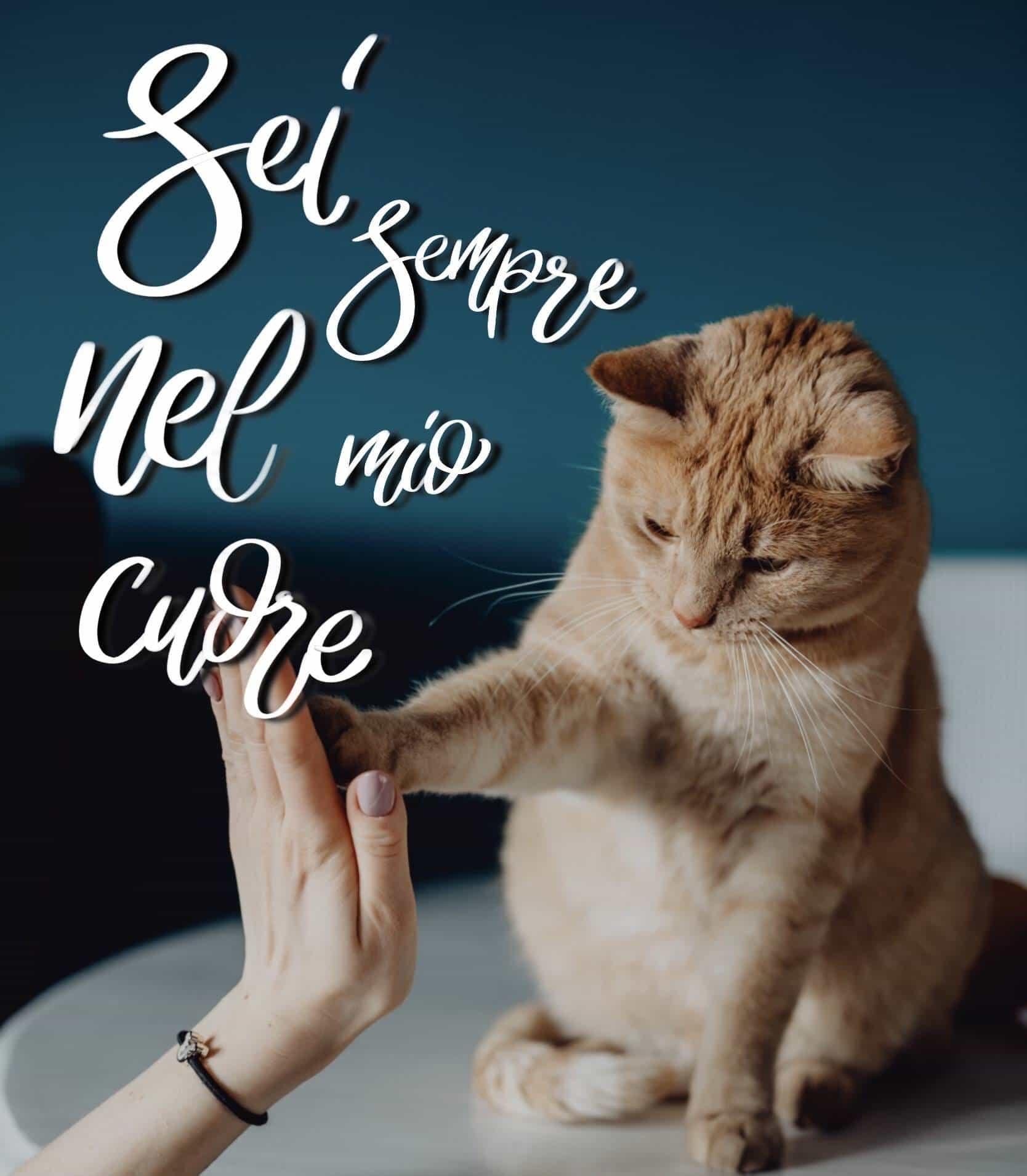 Buongiorno con gatto foto