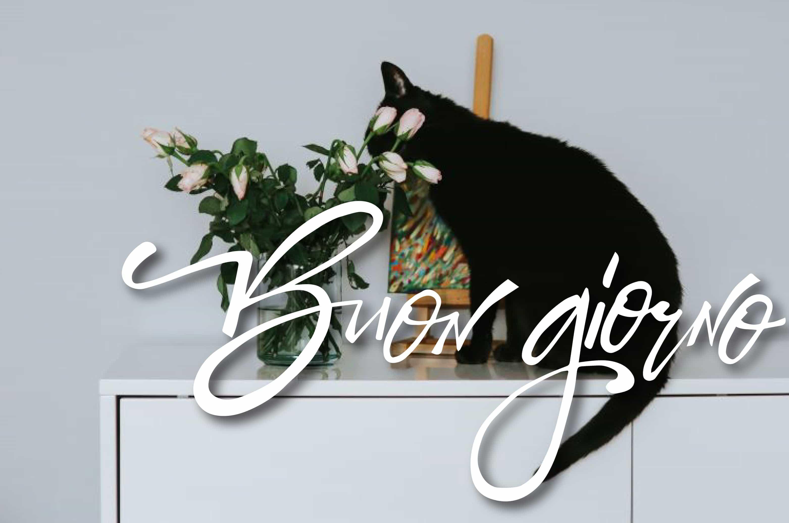 Foto con gatto nero della buona giornata