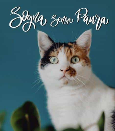 buonanotte con gatto, buonanotte gattini