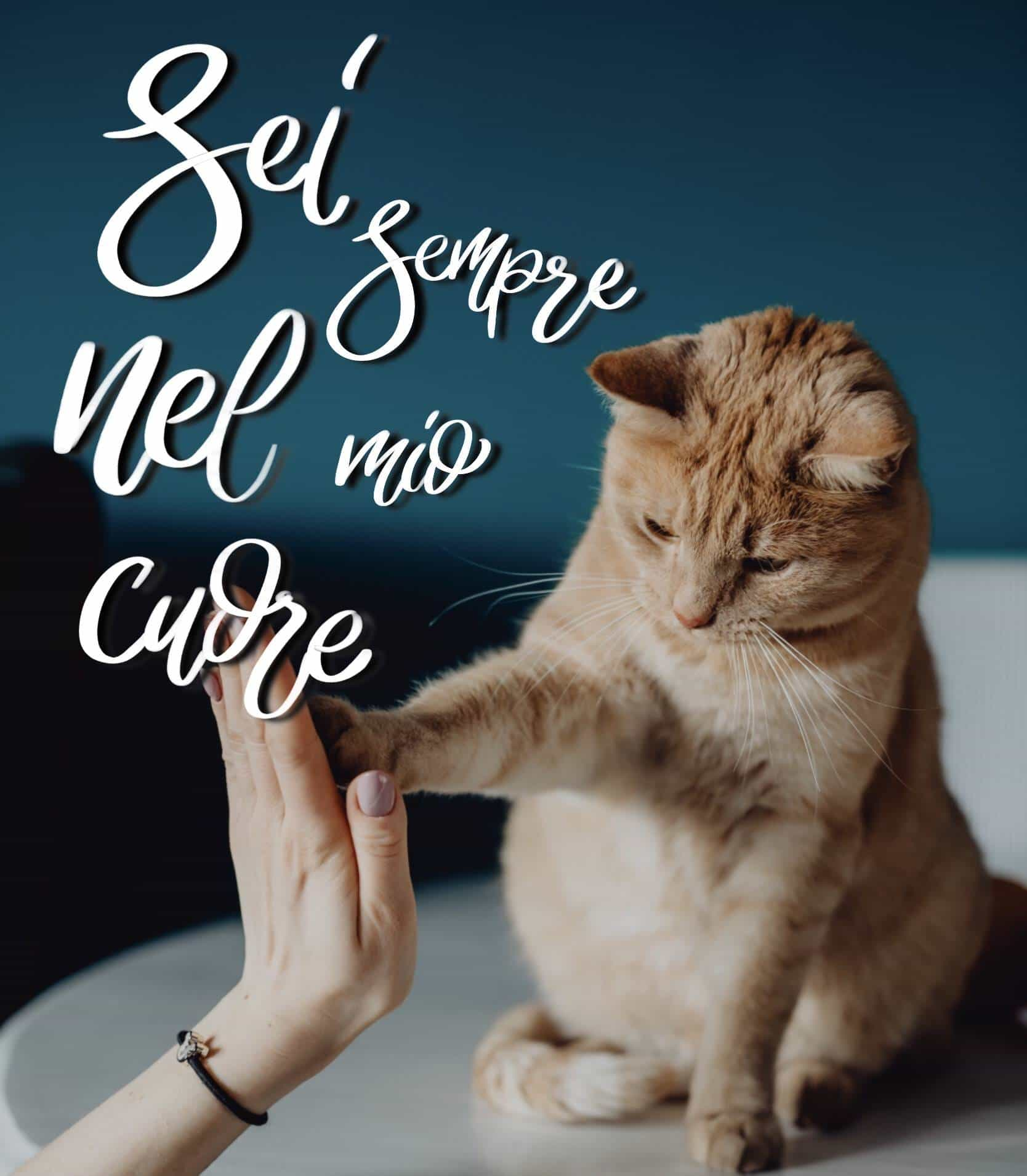 buonanotte gattini, buonanotte gatto, buonanotte animale